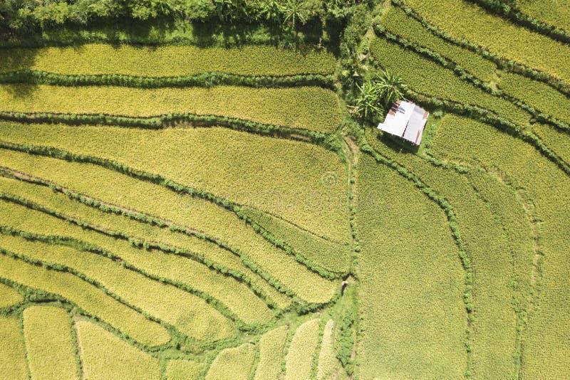 Satellietbeeld van hierboven op Groene Jonge Rijst Paddy Field Terrace Bali, Indonesië stock foto's