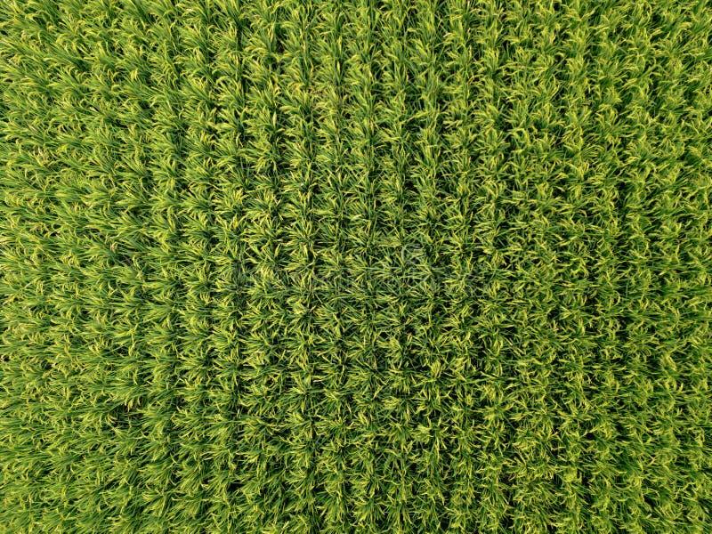 Satellietbeeld van rijst, landbouwgebieden in platteland van Taiwan in lentetijd Plattelandsgebied De natuurlijke textuur van het stock foto's