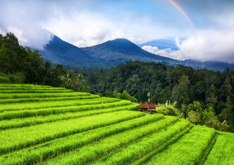 Satellietbeeld van rijstterrassen en vulkanen Landschap van hommel Landbouwlandschap van de lucht Regenboog boven bergen De V.N. stock afbeeldingen