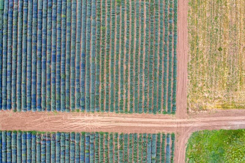 Satellietbeeld van wegen tussen lavendelgebieden stock foto