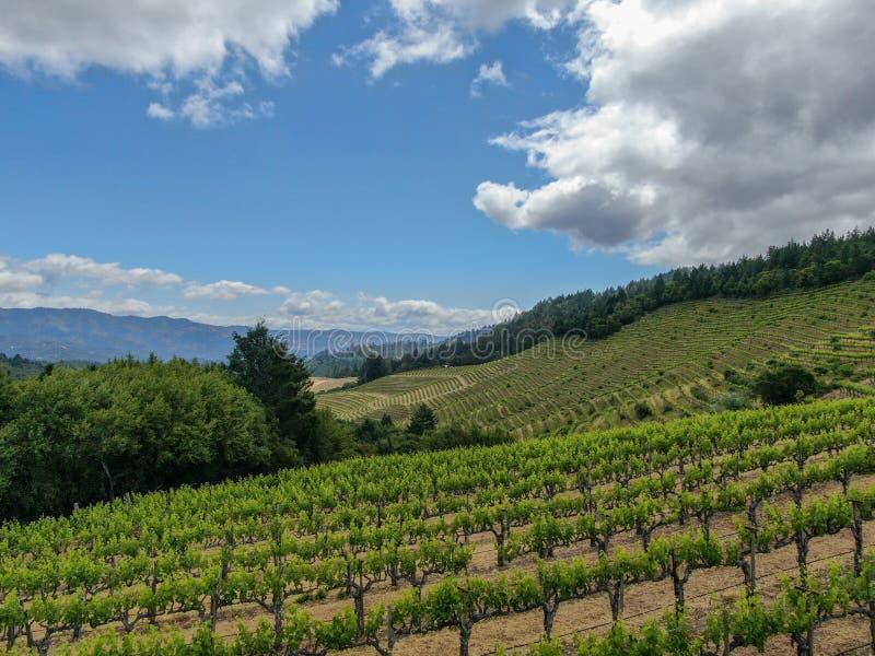 Satellietbeeld van wijnwijngaard in Napa-Vallei stock afbeelding