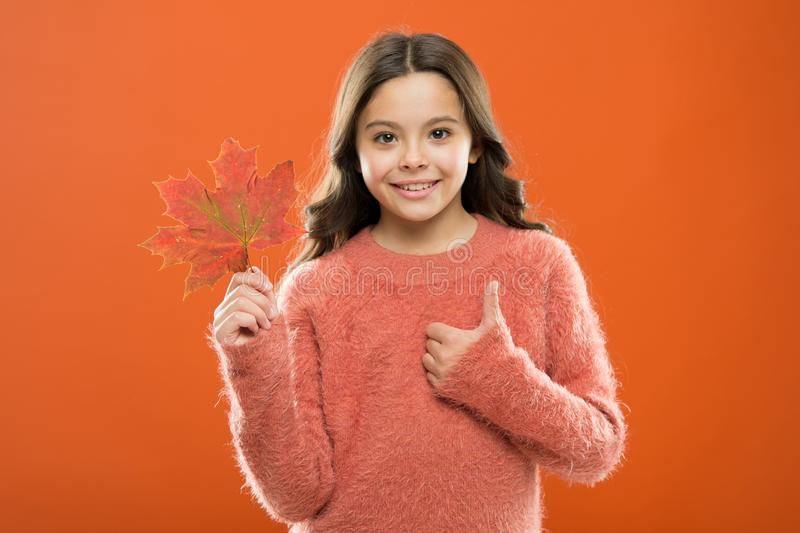 Satisfied kid show thumbs up. Little child hold maple leaf changing color. Celebrate autumn. Autumn is best season stock photos