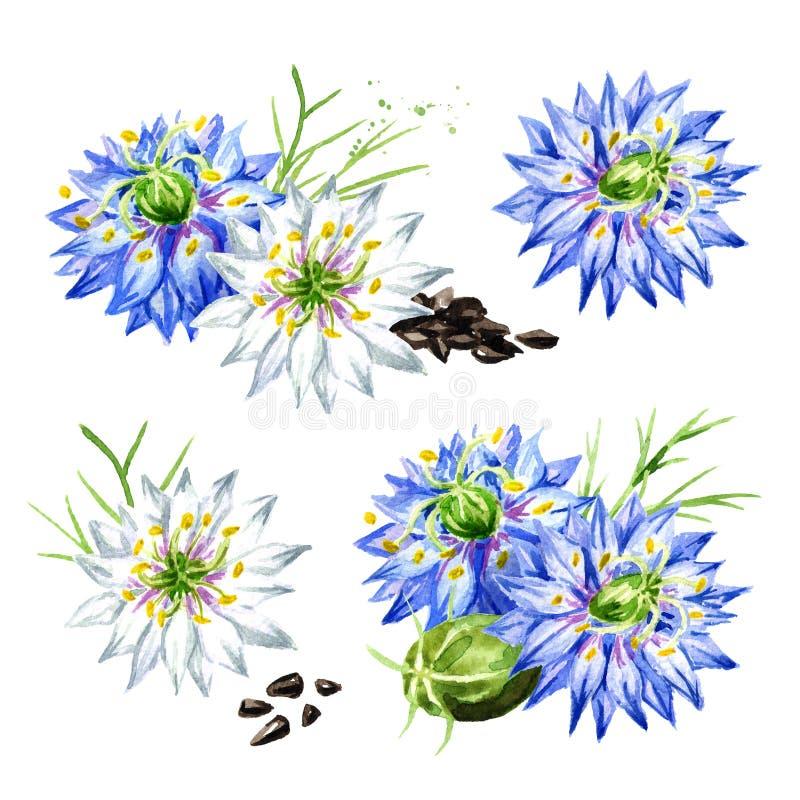 Sativa Nigella of de venkelbloem, notemuskaatbloem, Roman koriander, zwarte komijn, zwarte sesam, blackseed, zwarte karwijreeks,  vector illustratie