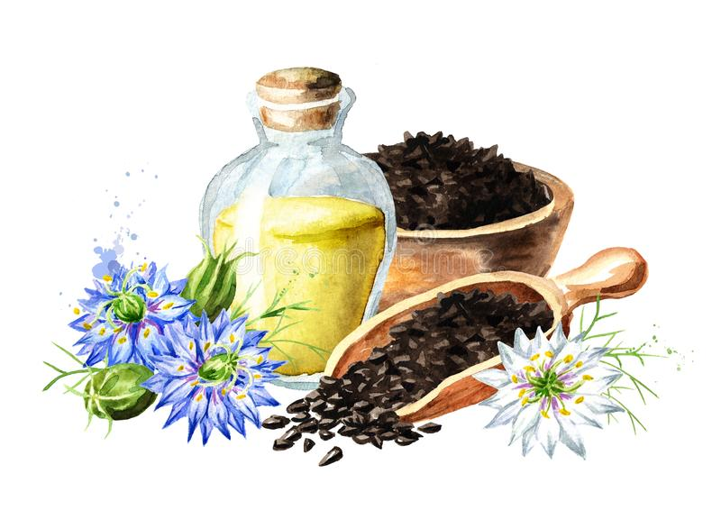 Sativa Nigella, venkelbloem, notemuskaatbloem, Roman koriander, zwarte komijn, zwarte sesam, blackseed, zwarte karwij, Bunium stock illustratie