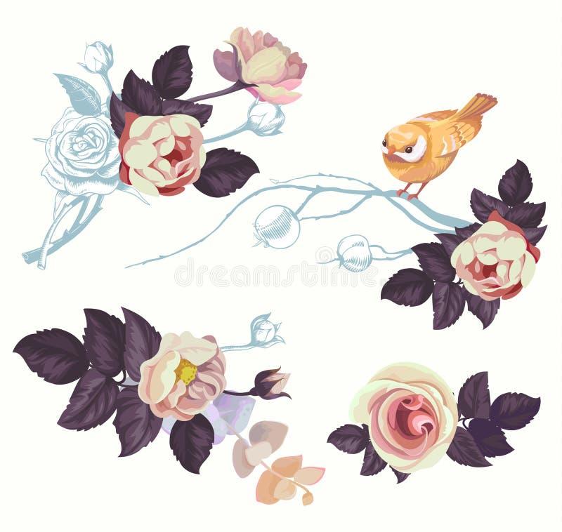 Sats för garnering för vattenfärg för filial för vårfågelblomma Blom- sommar abstrakta Rose Bouquet med näktergalet Roman stock illustrationer