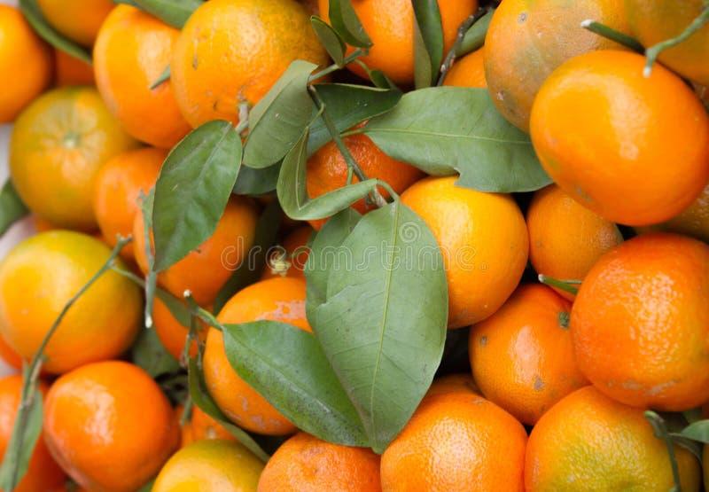 satsuma-mandarijnen stock foto