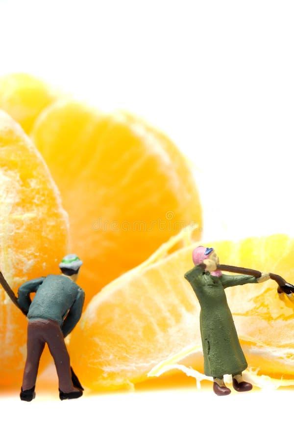 Satsuma miniatura del mandarino dei giardinieri fotografie stock libere da diritti