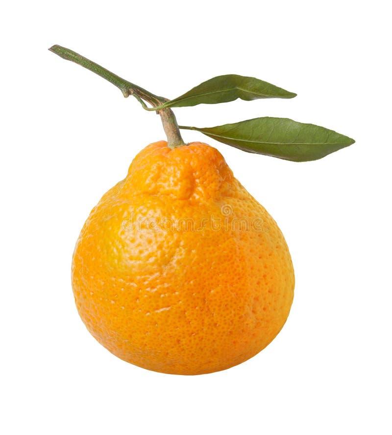 Satsuma-Orange getrennt mit Ausschnittspfad lizenzfreie stockfotos