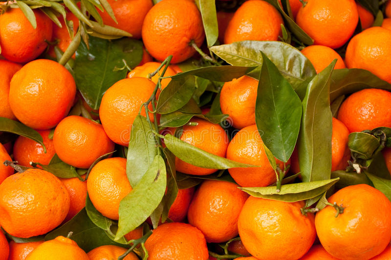 Download Satsumas stock image. Image of perspective, clementine - 20437063