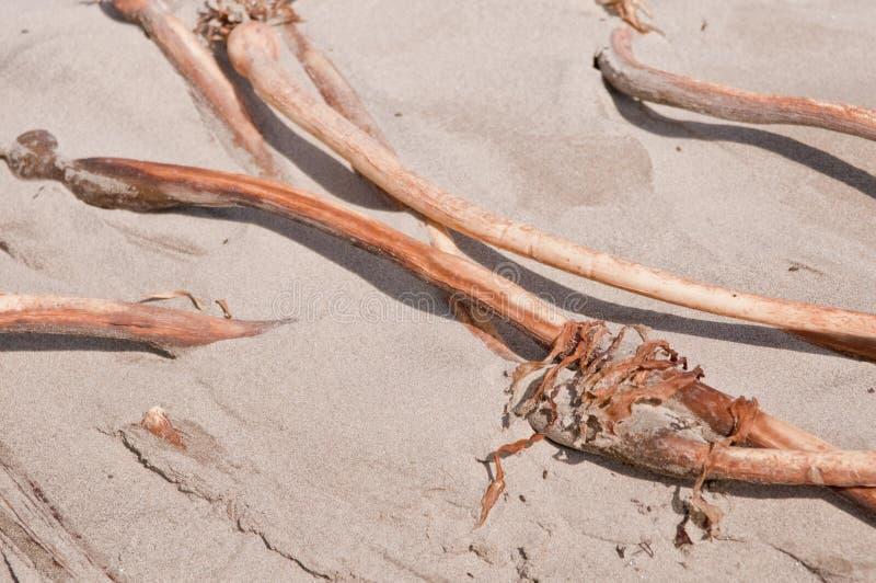 satt på land torr seaweed arkivfoto