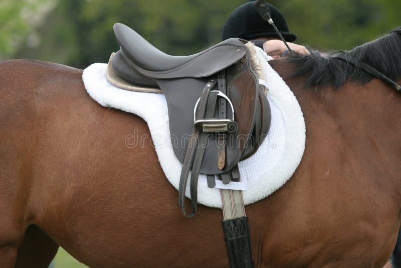 Sattel auf Pferd lizenzfreie stockfotografie