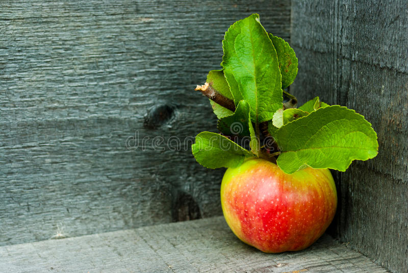 Saturated apple on a gray background of boards. Rich apple with a branch and leaves on a gray background of boards stock photography
