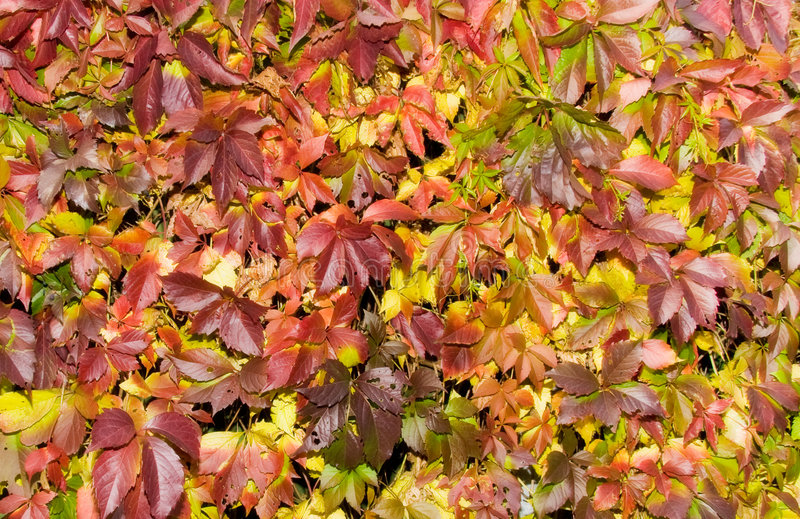 Download Saturated Red Autumn Foliage Stock Image - Image: 3251025