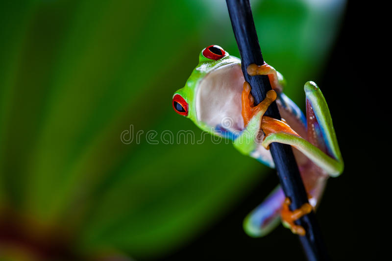 Saturated tropical concept with frog stock photography