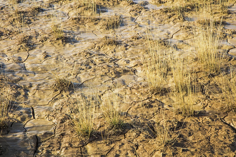 Saturated wet clay soil grass desert. The badlands dirt clay soil is mud water saturated and clumps of dry grass in desert stock photos