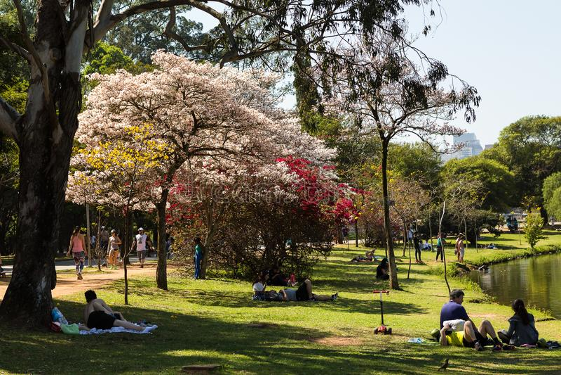 Saturday in the park. Sao Paulo, Brazil. September 2, 2017. Spring Saturday in Ibirapuera Park royalty free stock image
