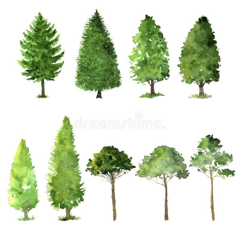 Satz Bäume, die durch Aquarell zeichnen vektor abbildung