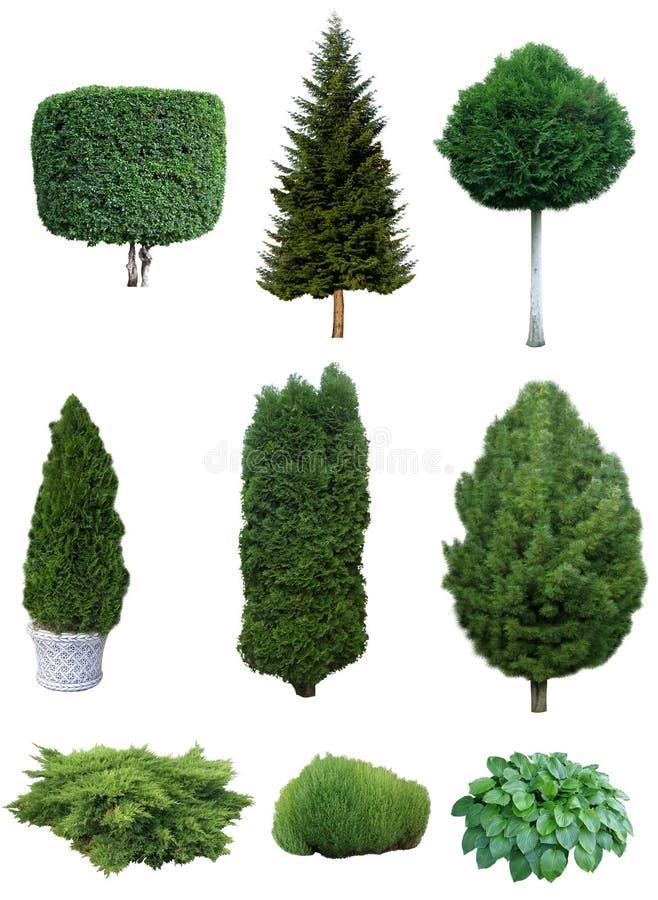 Satz Bäume und Sträuche lizenzfreie stockfotografie