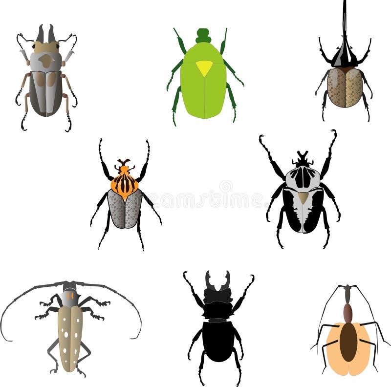 Satz Beatles-Insekten stockfoto