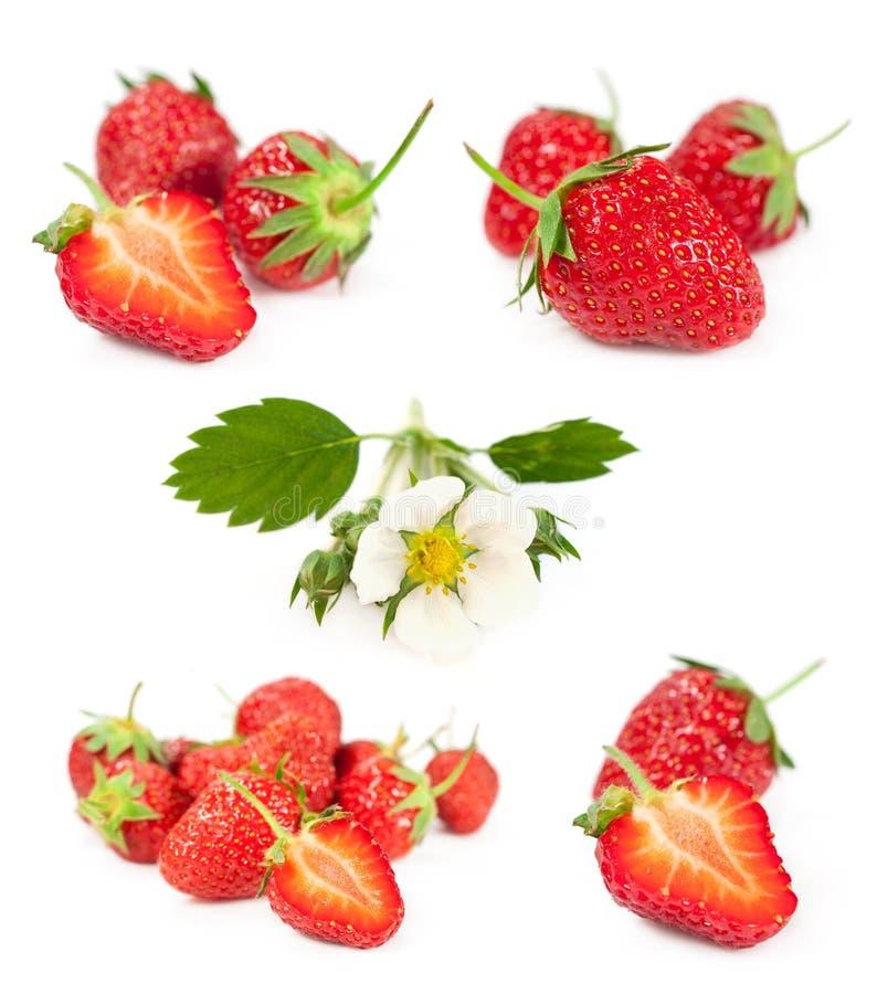 Satz Beeren und Blumen der Erdbeere lizenzfreie stockfotos