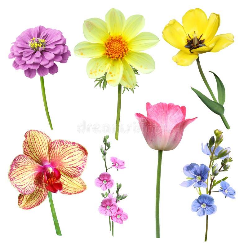 Satz Blumen auf einem weißen Hintergrund stockfoto