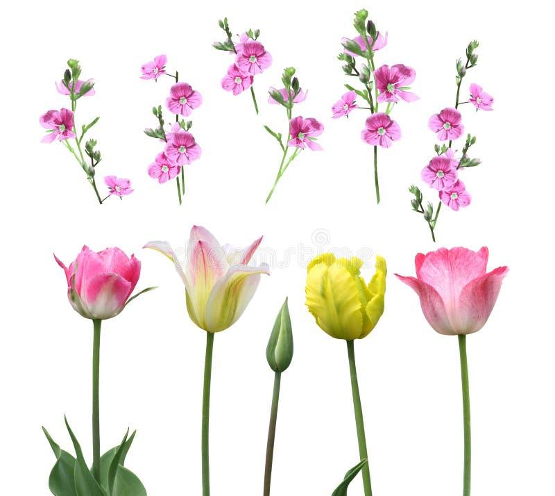 Satz Blumen auf einem weißen Hintergrund lizenzfreie stockfotos