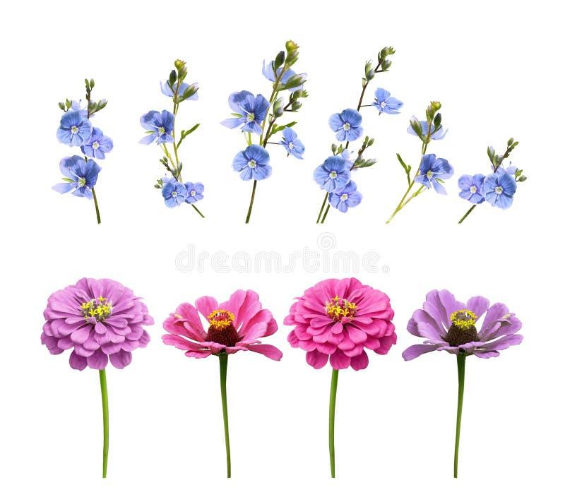 Satz Blumen auf einem weißen Hintergrund lizenzfreie stockfotografie