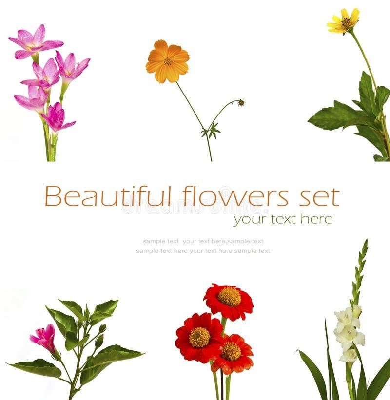 Satz Blumen auf weißem Hintergrund stockfotografie