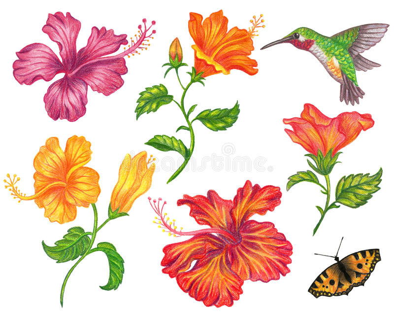 Satz der Hibiscusblume stockfotos