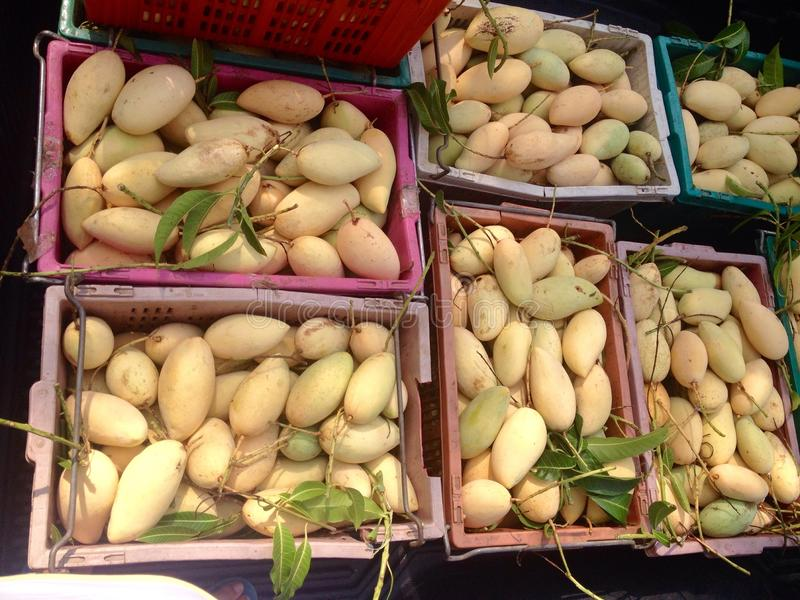 Satz der Mango lizenzfreie stockbilder