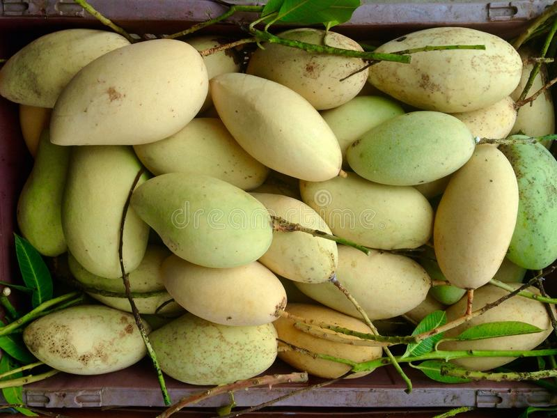 Satz der Mango lizenzfreies stockfoto