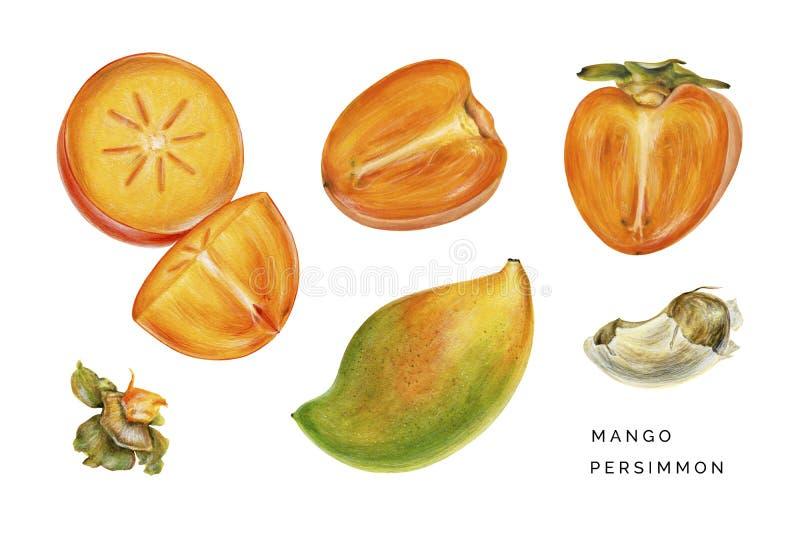 Satz der Persimone und der Mango lizenzfreies stockbild
