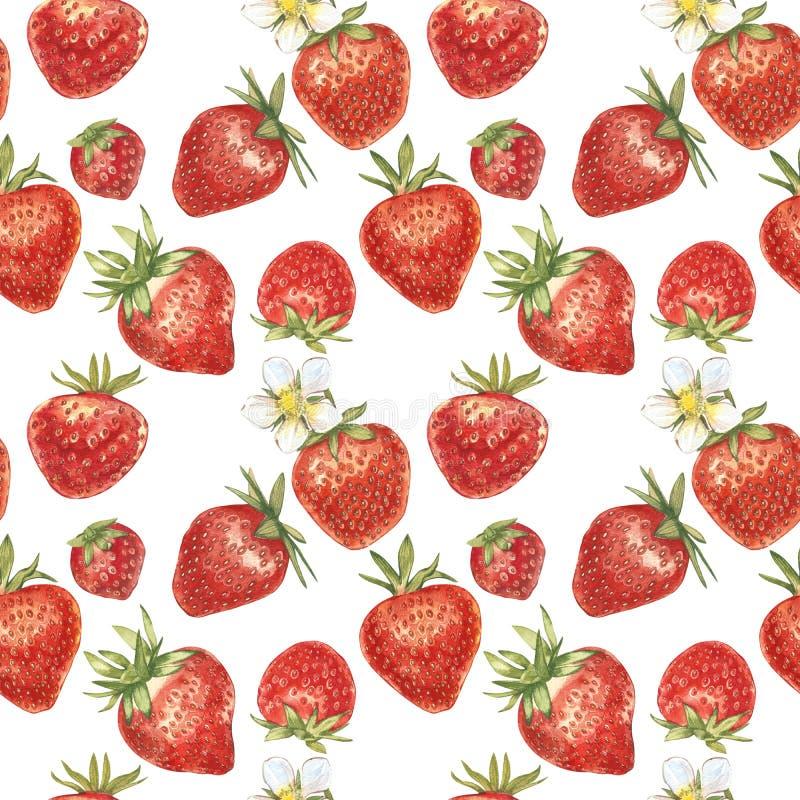 Satz der roten Beerenerdbeere lokalisiert auf weißem Hintergrund Hand gezeichnete Aquarellmalereiillustration von Beeren stockfotos