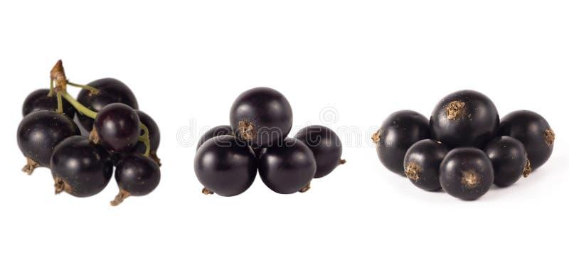 Satz der schwarzer Johannisbeere lokalisiert auf Weiß Reife und geschmackvolle schwarze Beere mit Kopienraum für Text stockfoto