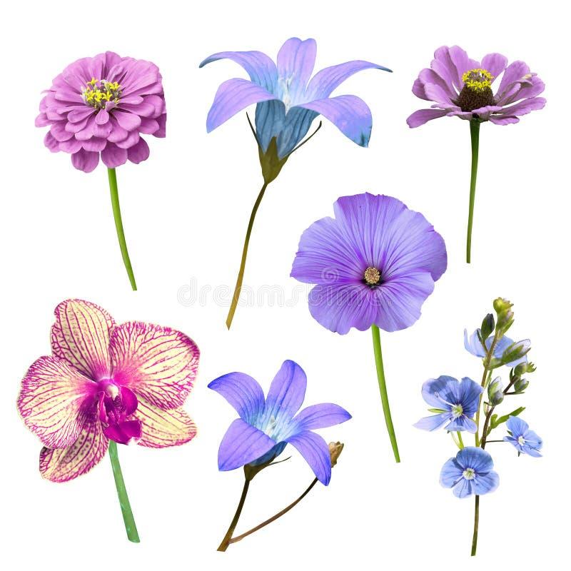 Satz des Blaus lokalisierte Blumen auf einem weißen Hintergrund lizenzfreie stockfotos