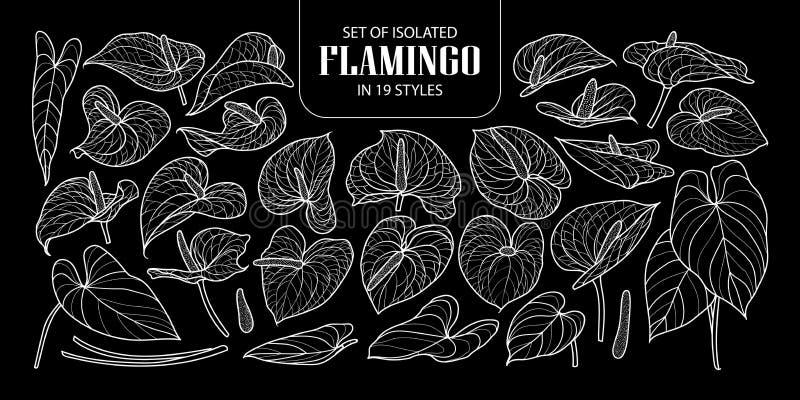 Satz des lokalisierten Flamingos in 19 Arten Nette Hand gezeichneter weißer Entwurf der Blumenvektor-Illustration nur vektor abbildung