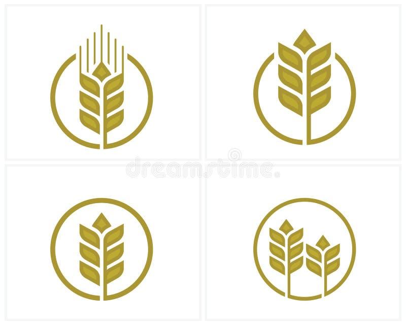 Satz des Luxuskornweizen-Logokonzeptes, Landwirtschaftsweizen Logo Template-Vektorikone lizenzfreie abbildung