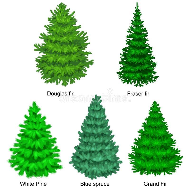 Satz des Weihnachtsvektorbaums mögen Tanne oder Kiefer Blautanne für Feier des neuen Jahres ohne Feiertagsdekoration, Immergrün vektor abbildung