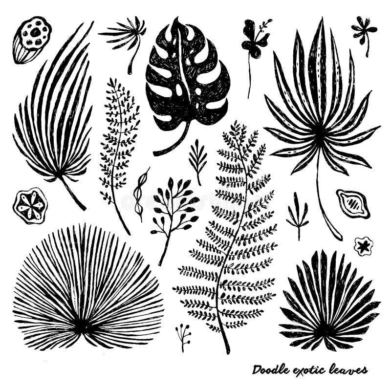 Satz exotische Palmblätter des schwarzen Gekritzels auf einem weißen Hintergrund Botanische Illustration des Vektors, Elemente fü lizenzfreie abbildung