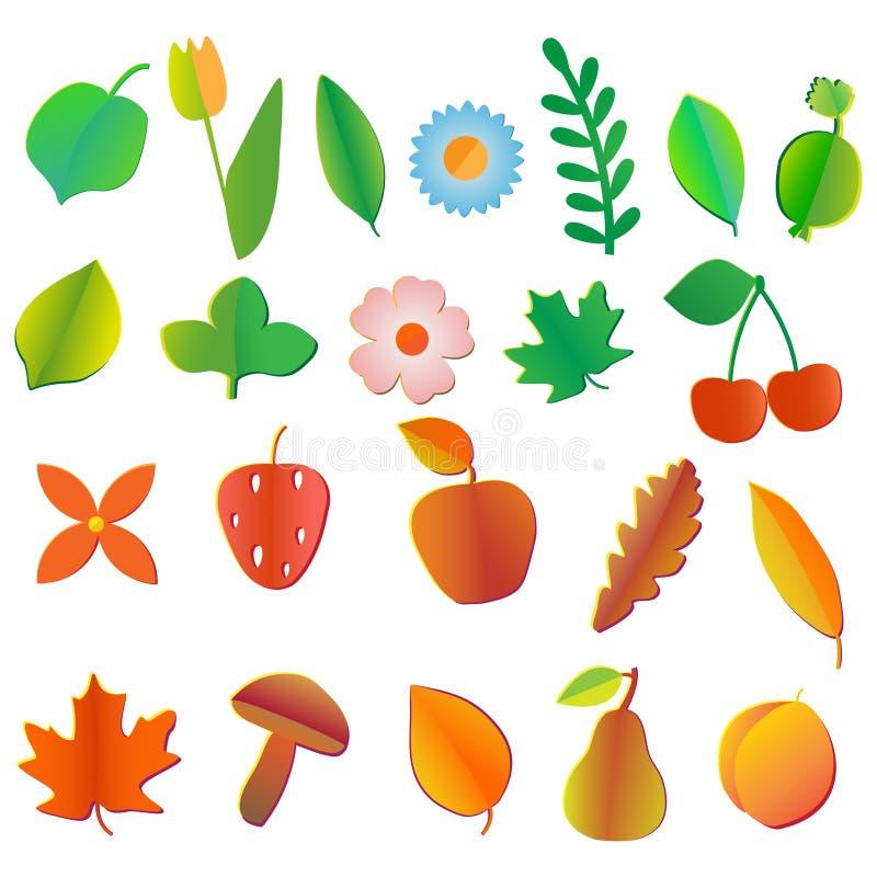 Satz Farbige Früchte, Blumen Beeren, Blätter Und Pilze Vektor ...