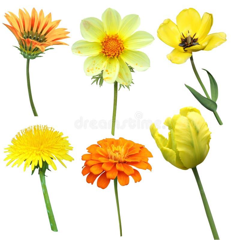 Satz Gelb lokalisierte Blumen auf einem weißen Hintergrund stockfotos