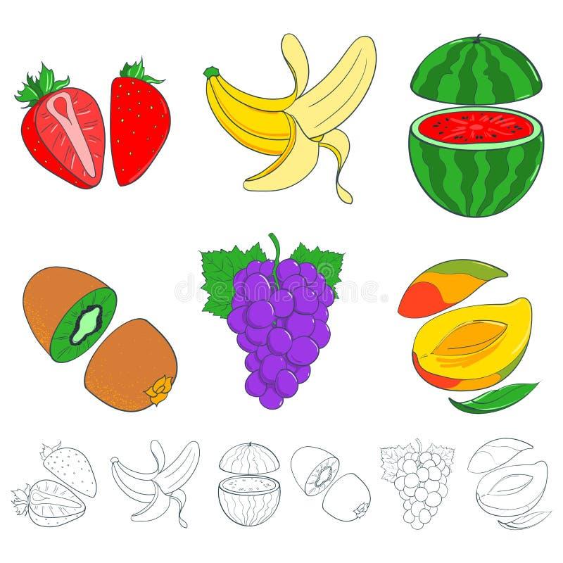 Satz gemalte Früchte vektor abbildung. Illustration von abbildung ...
