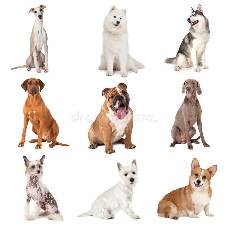 Satz gemeine Hunde lizenzfreie stockbilder