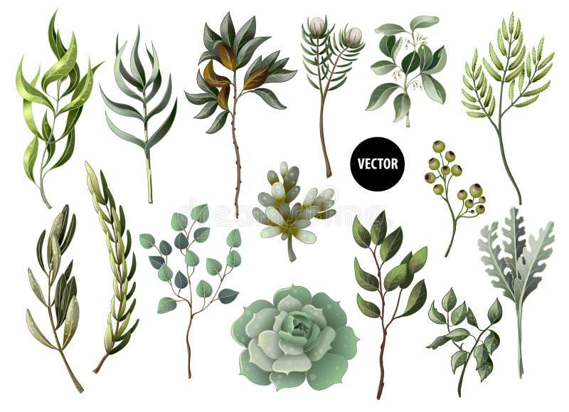 Satz Grün lässt Kraut und Succulent in der Aquarellart Eukalyptus, Magnolie, Farn und andere Vektorillustration stock abbildung