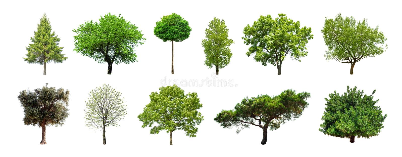 Satz grüne Bäume lokalisiert auf weißem Hintergrund stockfotografie