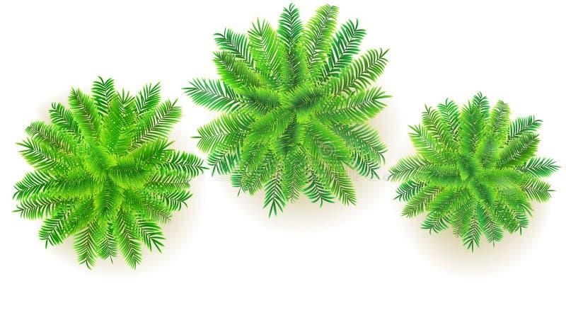 Satz grüne Palmen, Illustration des Vektors 3D lokalisiert auf weißem Hintergrund Draufsicht über Niederlassungen von Kokosnussbä stock abbildung