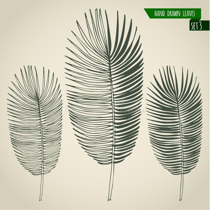 Satz Hand gezeichnete Palmblätter stock abbildung