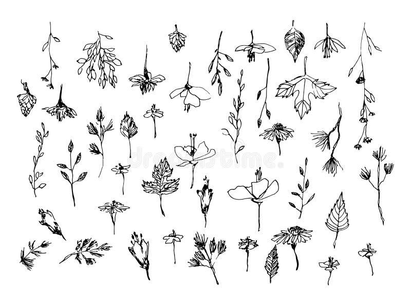 Satz Hand gezeichnete Unkrautfeldkräuter, Blumen, Blätter Entwurf von Anlagen Skizzen- oder Gekritzelvektorillustration Schwarzes lizenzfreie abbildung