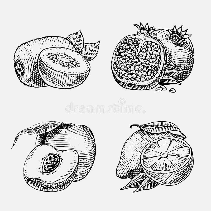 Satz Handgezeichnete, gravierte frische Früchte, vegetarisches Lebensmittel, Anlagen, Weinlese, die Kiwi, gelbe Zitrone des Pfirs lizenzfreie abbildung
