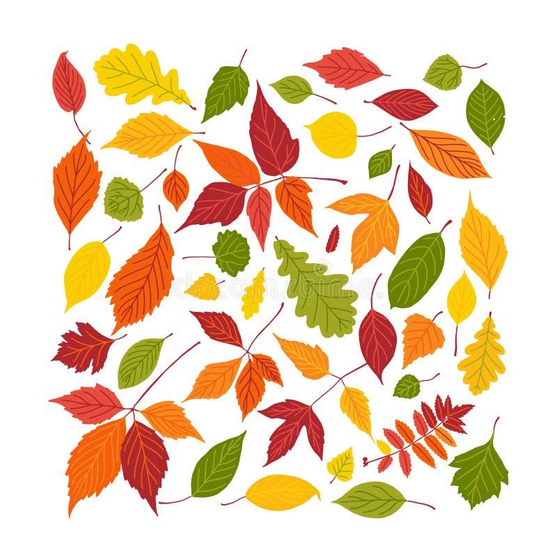 Satz heller Herbstlaub Fallblattquadrat-Füllerahmen lokalisiert auf weißem Hintergrund Auch im corel abgehobenen Betrag lizenzfreie abbildung